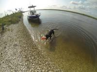 Highlight for album: Shadow on a Shell Beach in Louisiana 2013