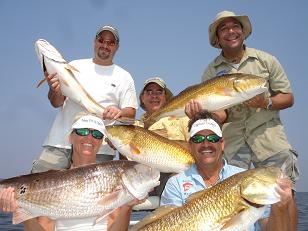 Bull Redfish